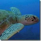 เล่นหุ้น Turtle Trader 8