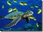 หุ้น_green-sea-turtle