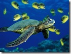 greenseaturtle thumb เปิดตำนาน วิธีการเล่นหุ้นแบบเซียนเต่า : The Turtle Traders (10)