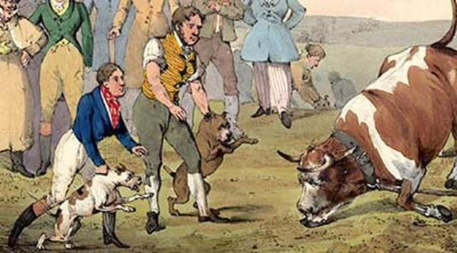 bull-baiting-historic-2