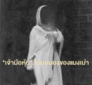 White-Lady-3.jpg